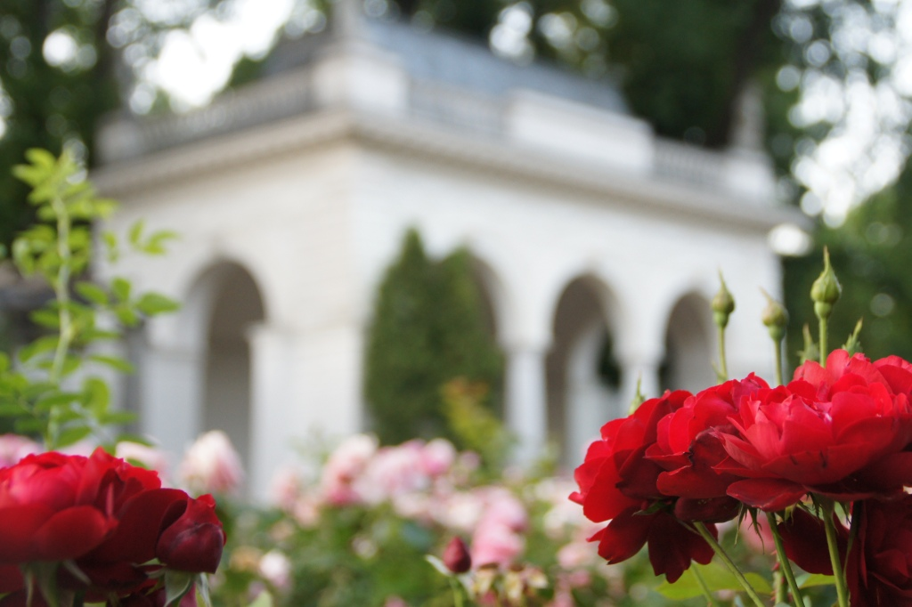 rose garden roberta caldas